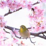【3月の手紙の書き出し】桜や春の季語を含む文例を紹介!