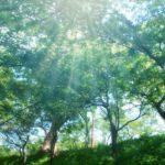 5月の手紙の書き出し:春季語や時候の挨拶を含む例文・挨拶文の紹介