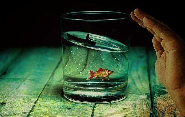 金魚,死んだら