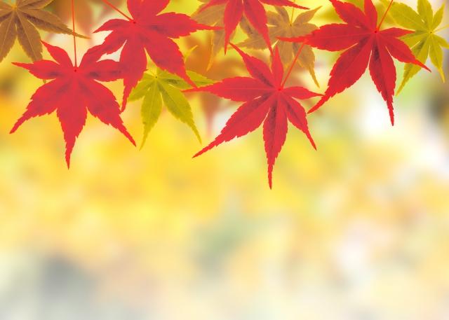 10月 季語